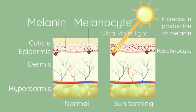 How pigment formed melsama